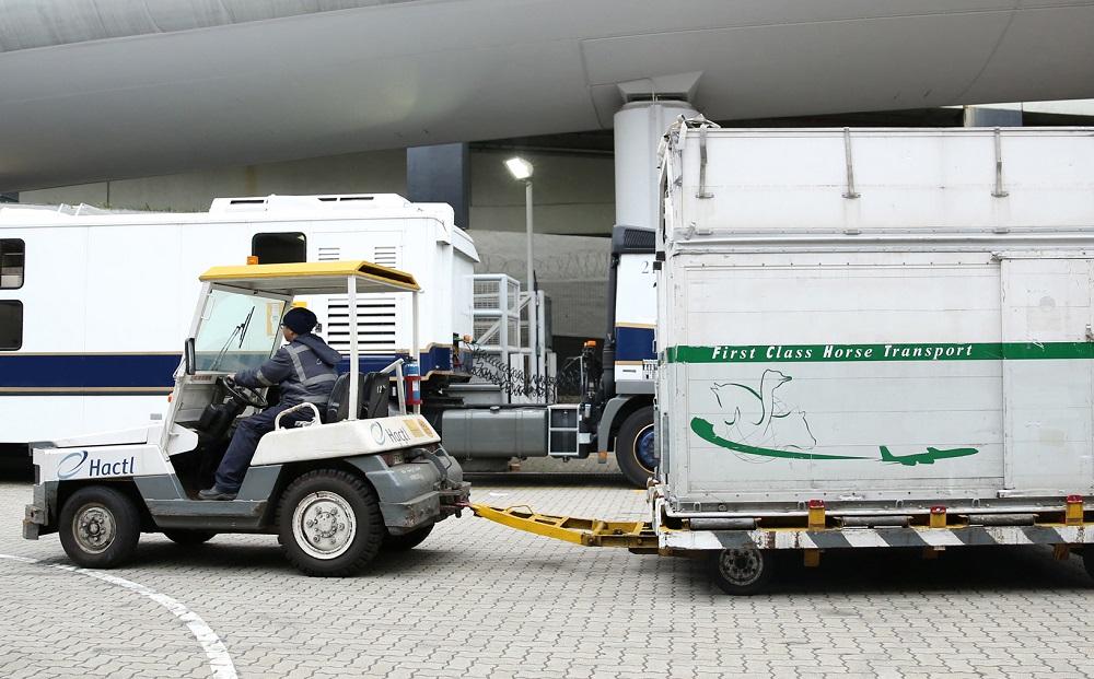 Logistics BusinessHactl Handles Longines Masters Horses