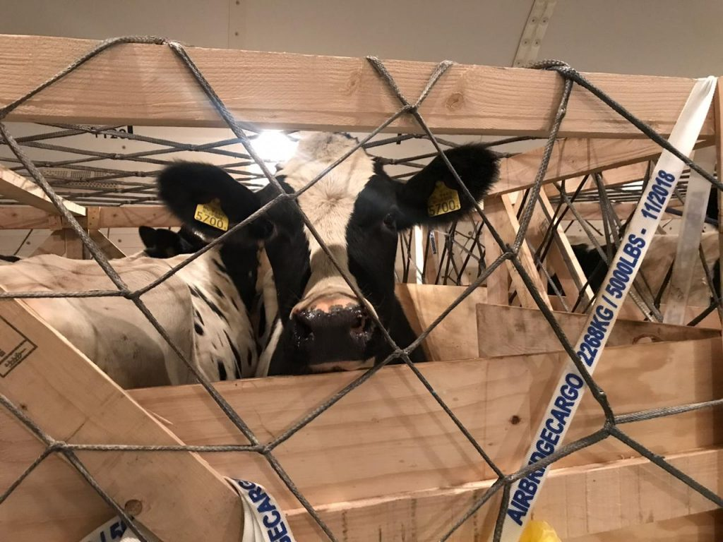 Logistics BusinessSmooth Flight for AirBridgeCargo's 'Special Passengers'