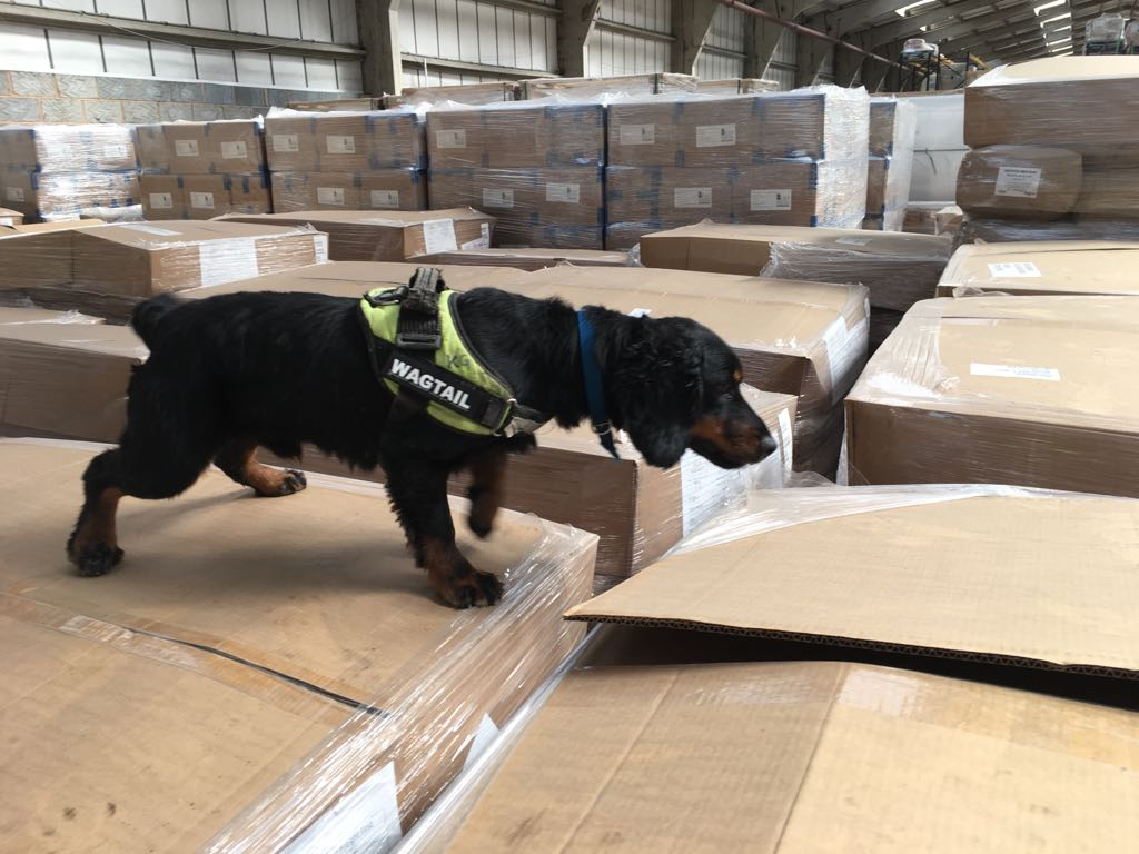 Logistics BusinessWagtail Provide Explosive Detection Dogs for UK Air Cargo Industry